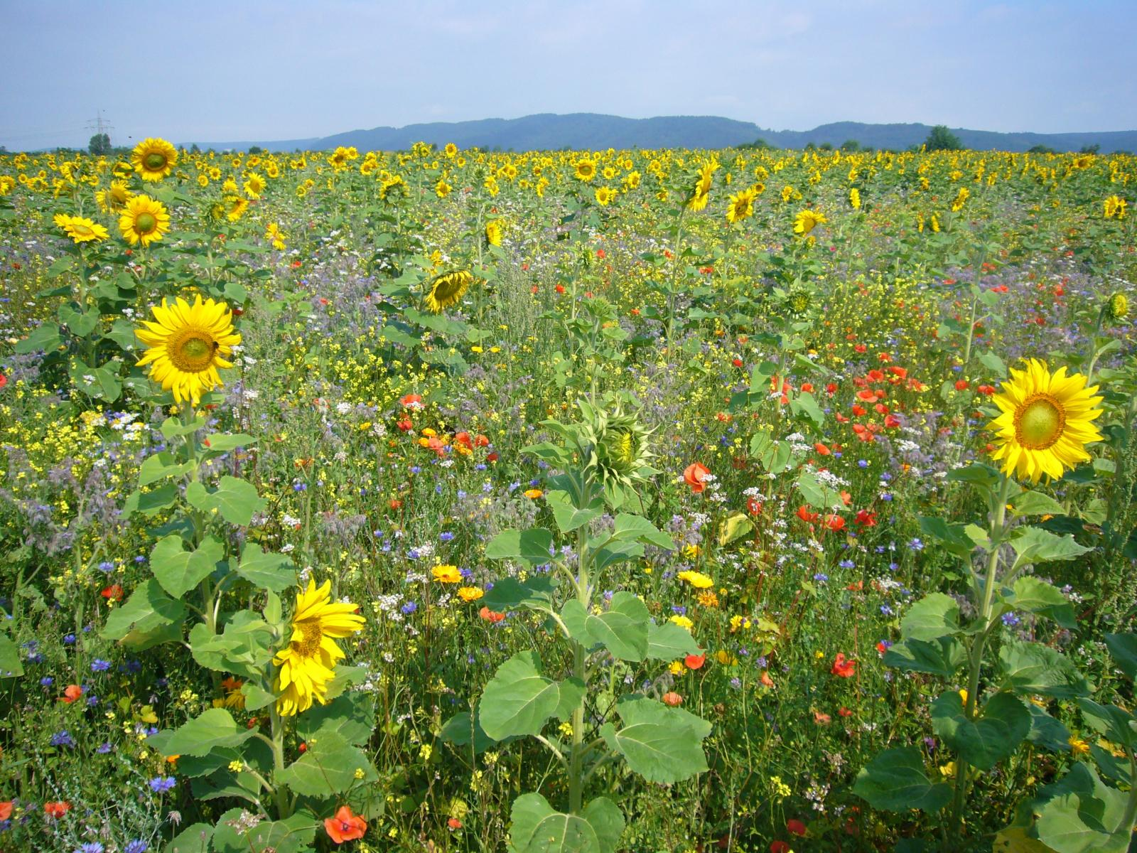 Die vielfalt der Natur (Bienenweide).jpg